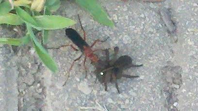 Crepy bug