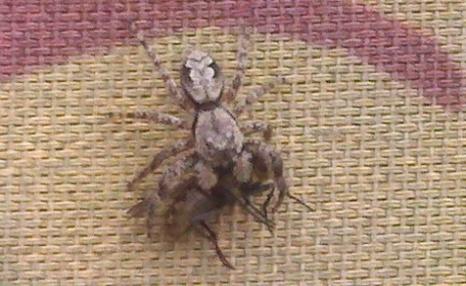 Spiderandfly