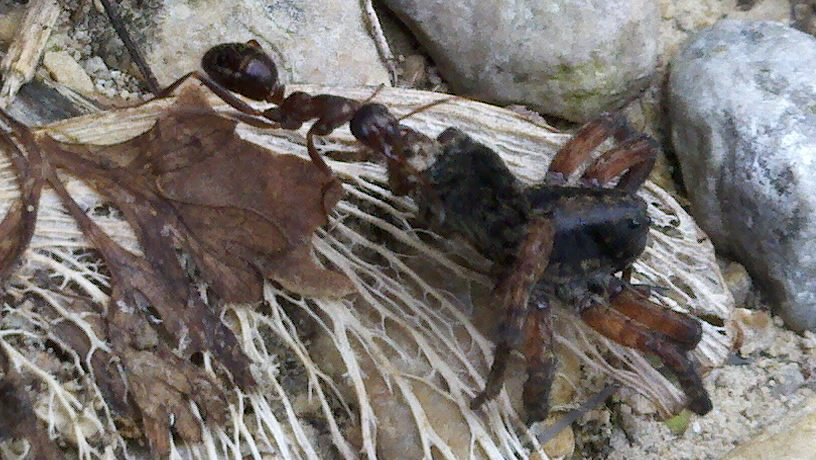 Spiderwithdinner